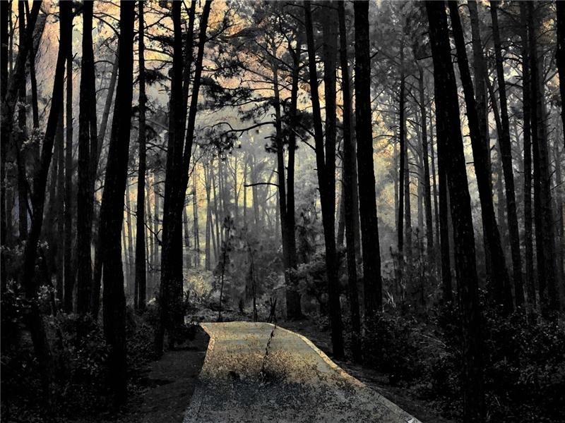作品名稱: 漫步森林 攝影 黃邦培