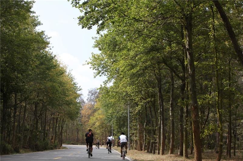 作品名稱: 森呼吸 攝影 鄭碧珍