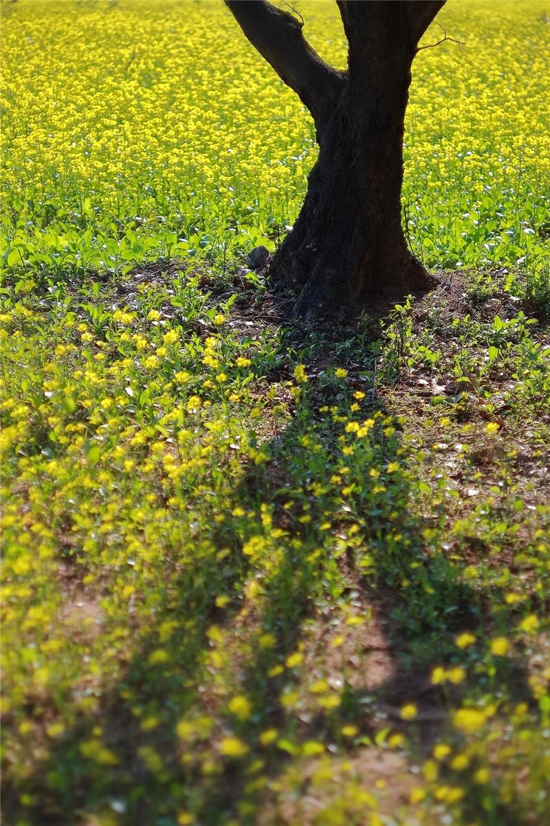作品名稱: 春綠 攝影 王蘇愷