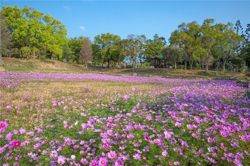 作品名稱: 春暖花開林務所 攝影 王衛煌
