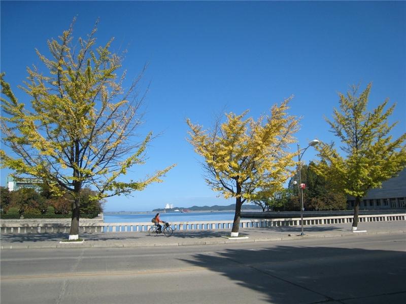 作品名稱: 行道樹下的漫遊 攝影 王賢德