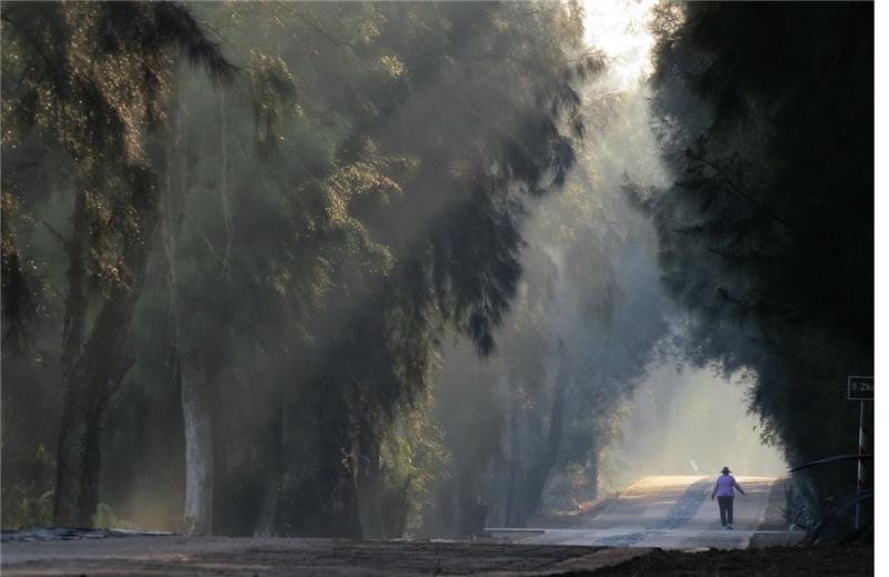 「森愛金門--金門與樹的千年之約」